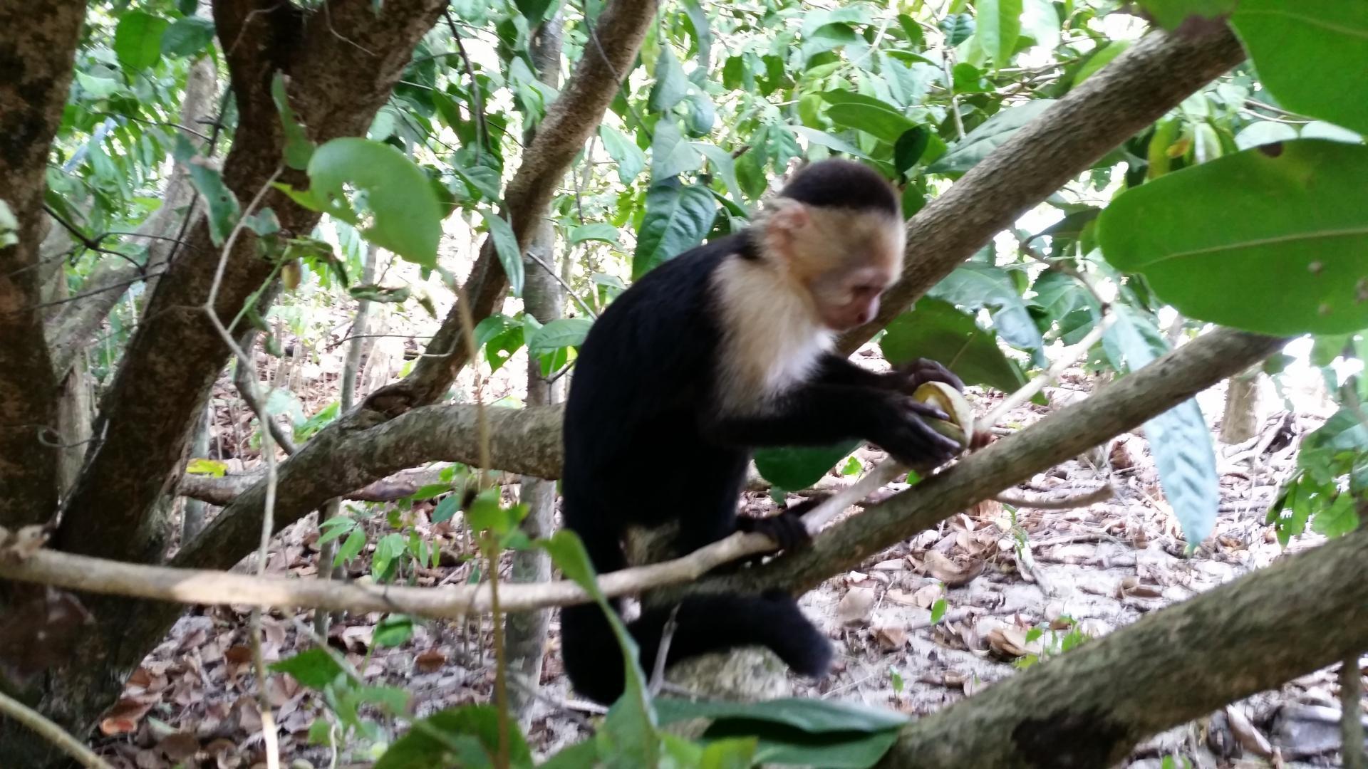 Mon itinéraire Costa Rica (2 semaines)