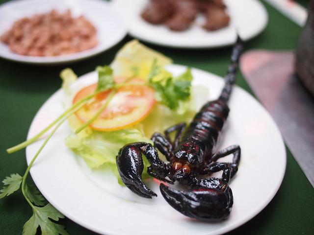 Scorpion frit, Thaïlande