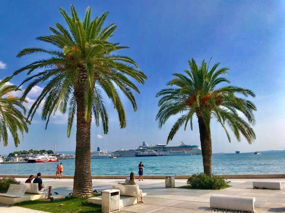 Split palmier